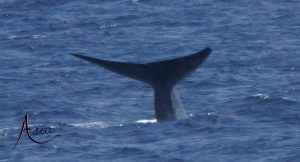 indonesia-yacht-charter-blue-whale-2