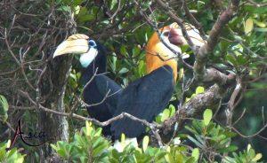 indonesia-yacht-charter-papuan-hornbills