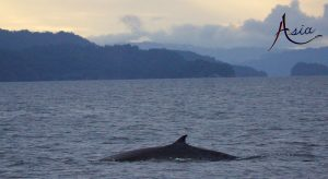 indonesia-yacht-charter-triton-whale-2