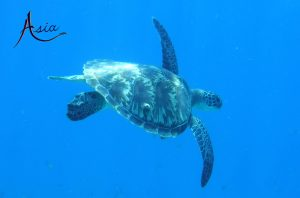 yacht-charter-banda-sea-indonesia-snorkeling