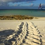 turtle-tracks-on-beach-expedition-charters-indonesia