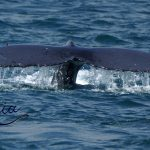 whale-remote-yacht-charter-indonesia